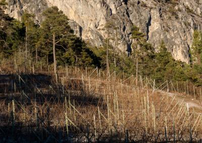Weinbau unter der Wand